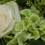 matrimonio-tema-bianco-verde