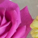 matrimonio-tema-rosa-giallo