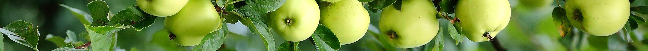 vendita piante da frutto Omegna lago d'Orta