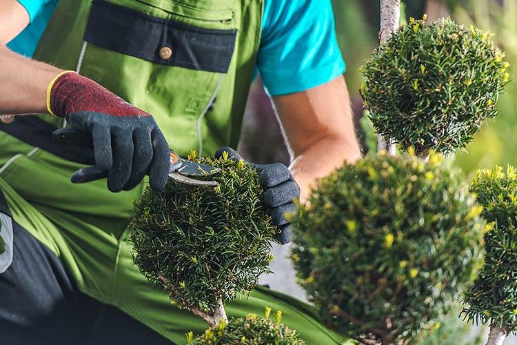Manutenzione giardini: un servizio accurato e professionale