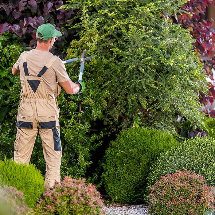 Servizio manutenzione giardini a Pettenasco